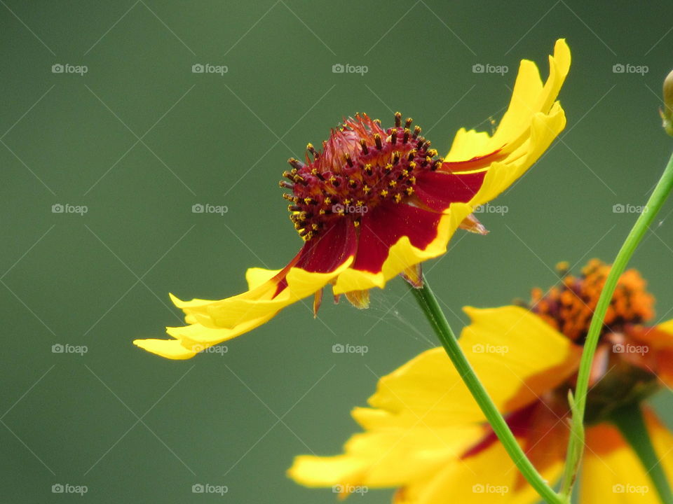 Center of a wild flower, side view