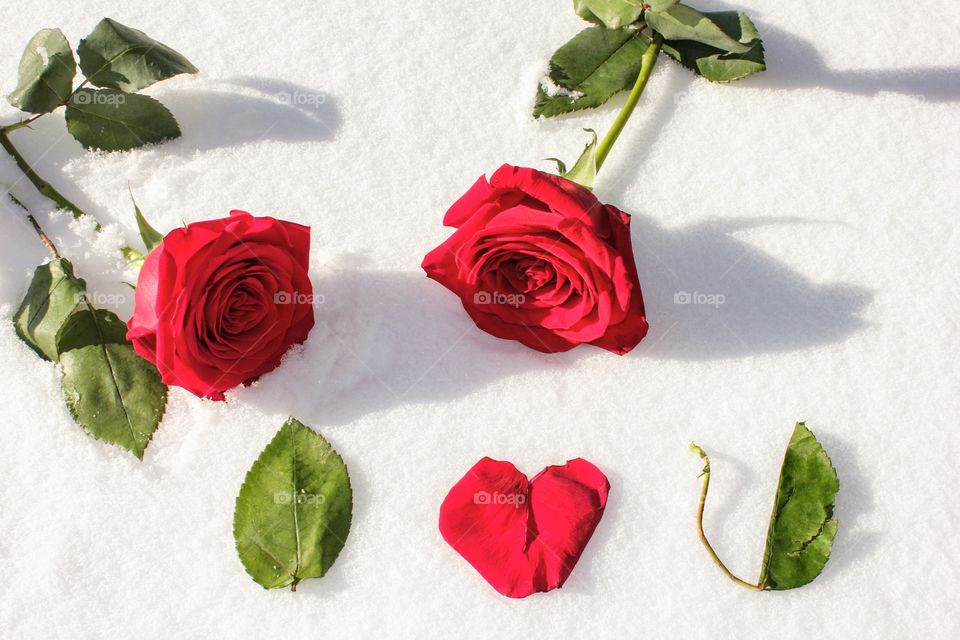 Two roses on snow