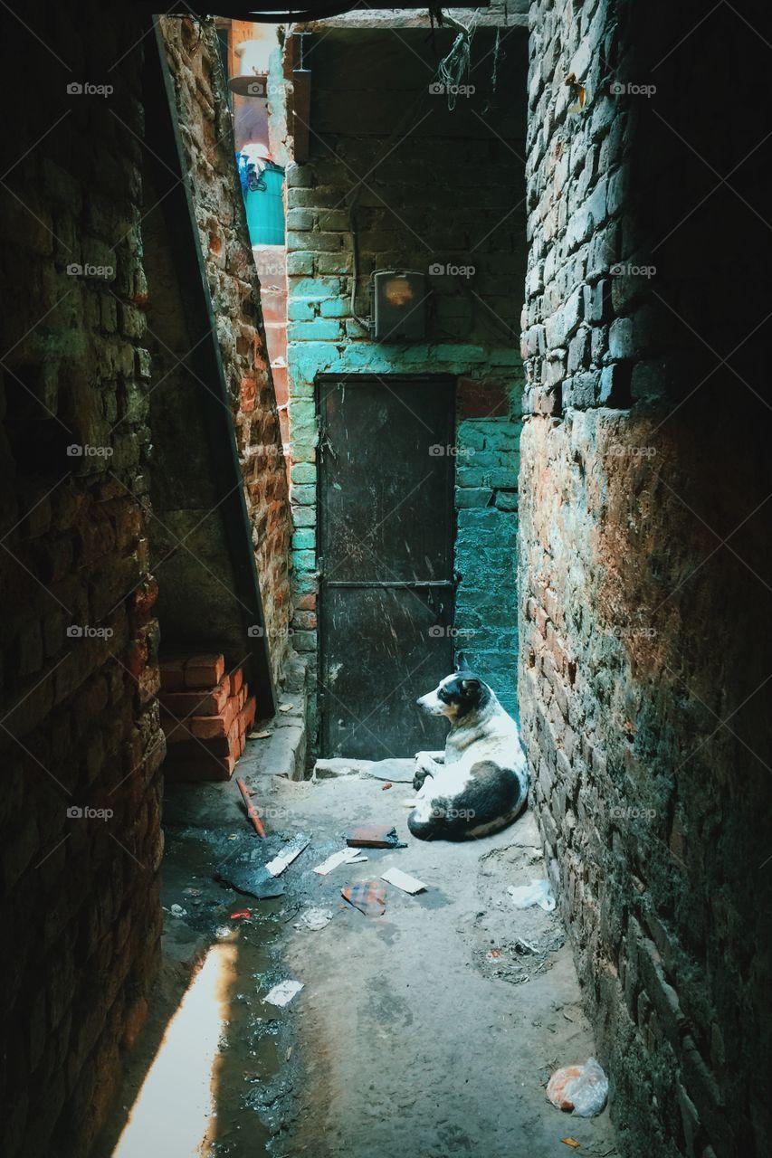 Dog sleeping in the slums of Delhi