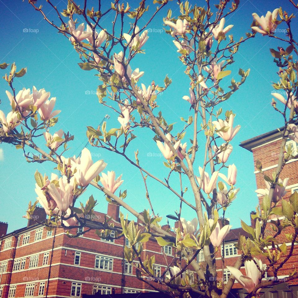 feel the breeze. springtime in London