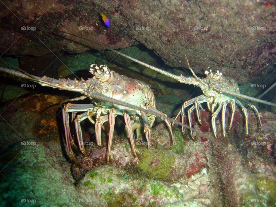 Cuba, scuba diving