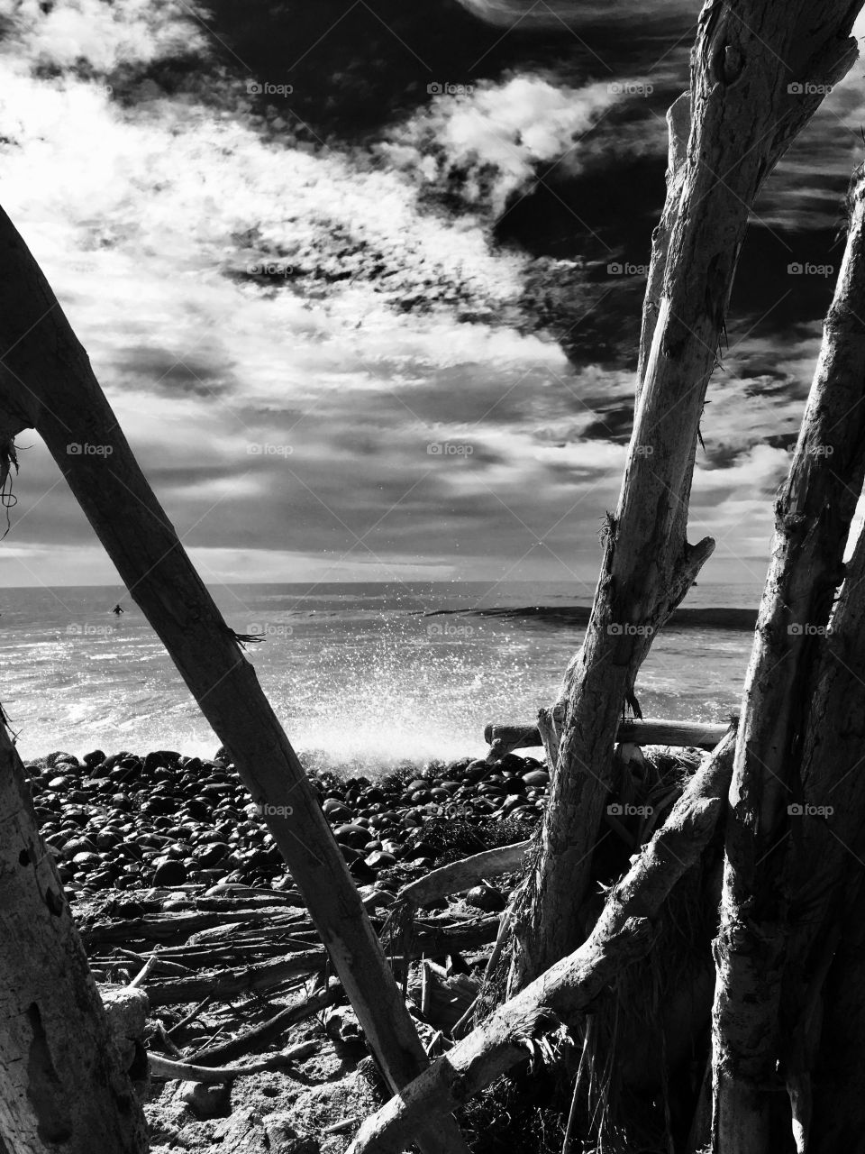 Driftwood, Sand &  Serenity