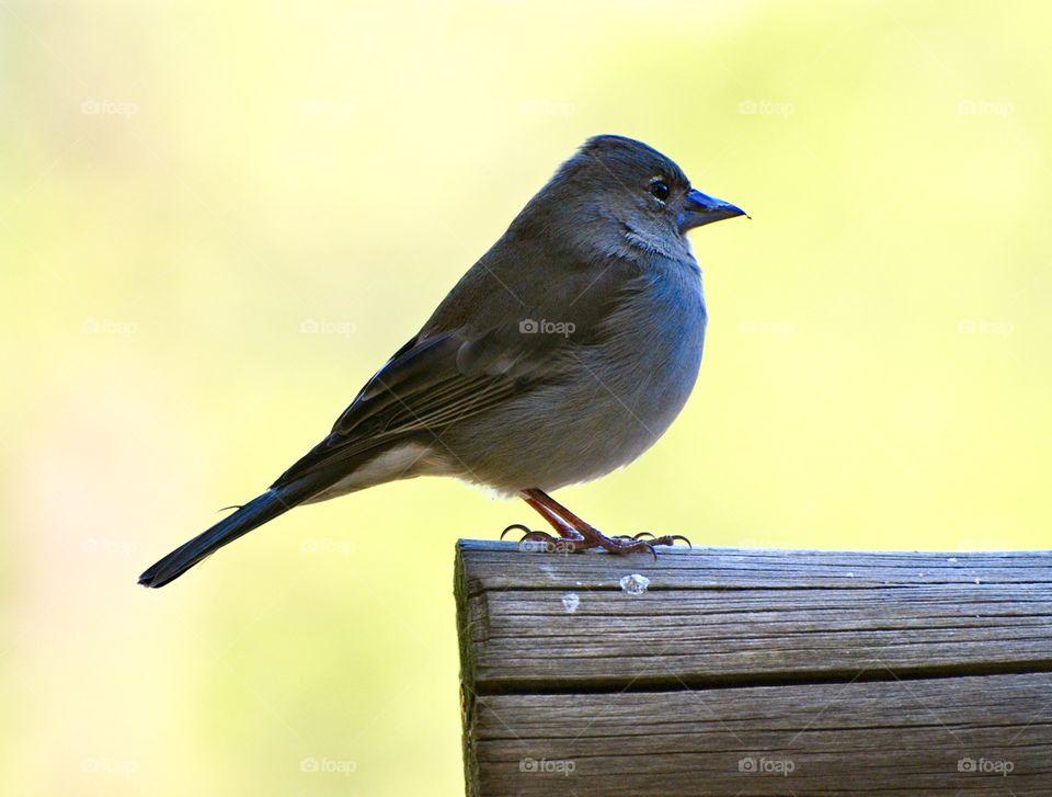 Closeup little bird