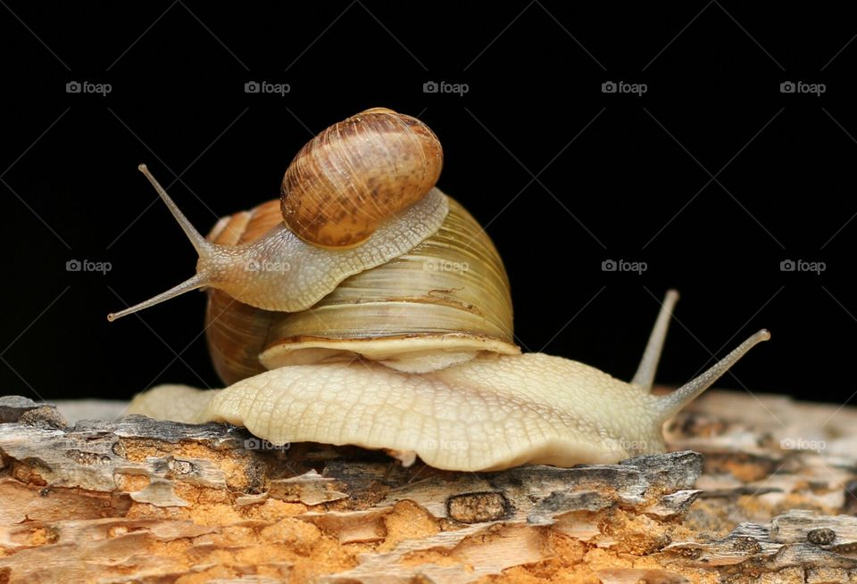 Family snails on the old wood texture