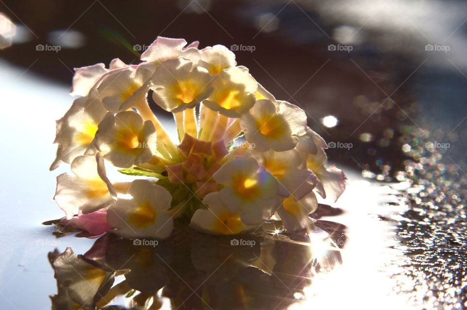 Flowers and reflections