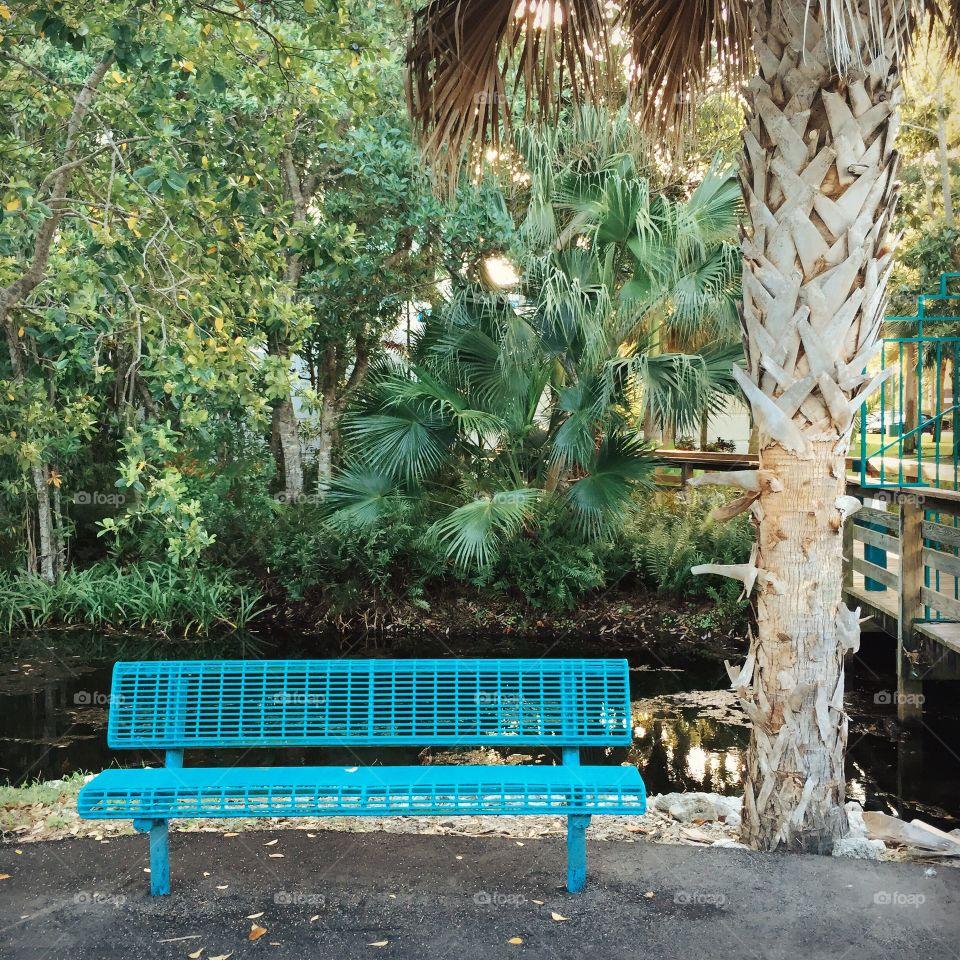 Bench + Palm Tree