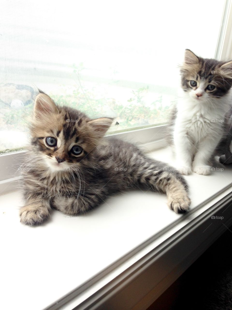 Baby kitties