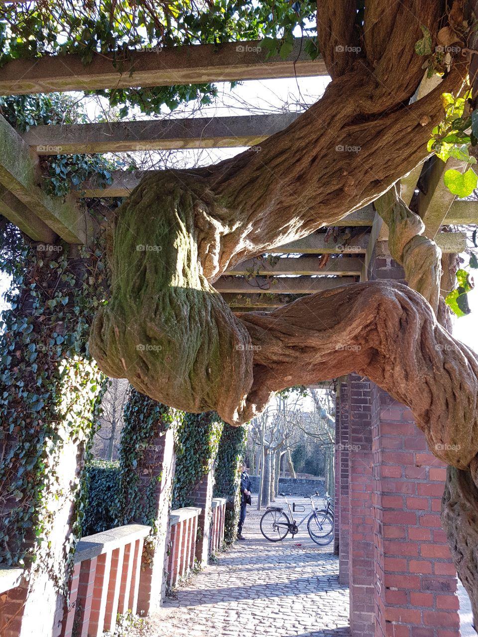 Baum Wunder