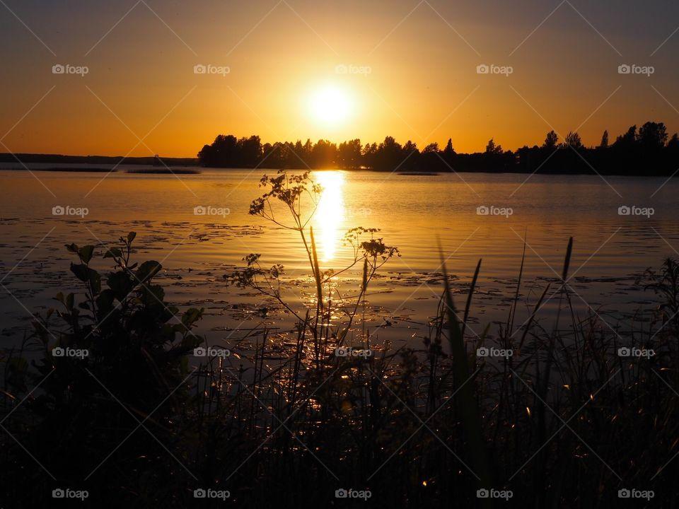 Beautiful golden summer sunset.