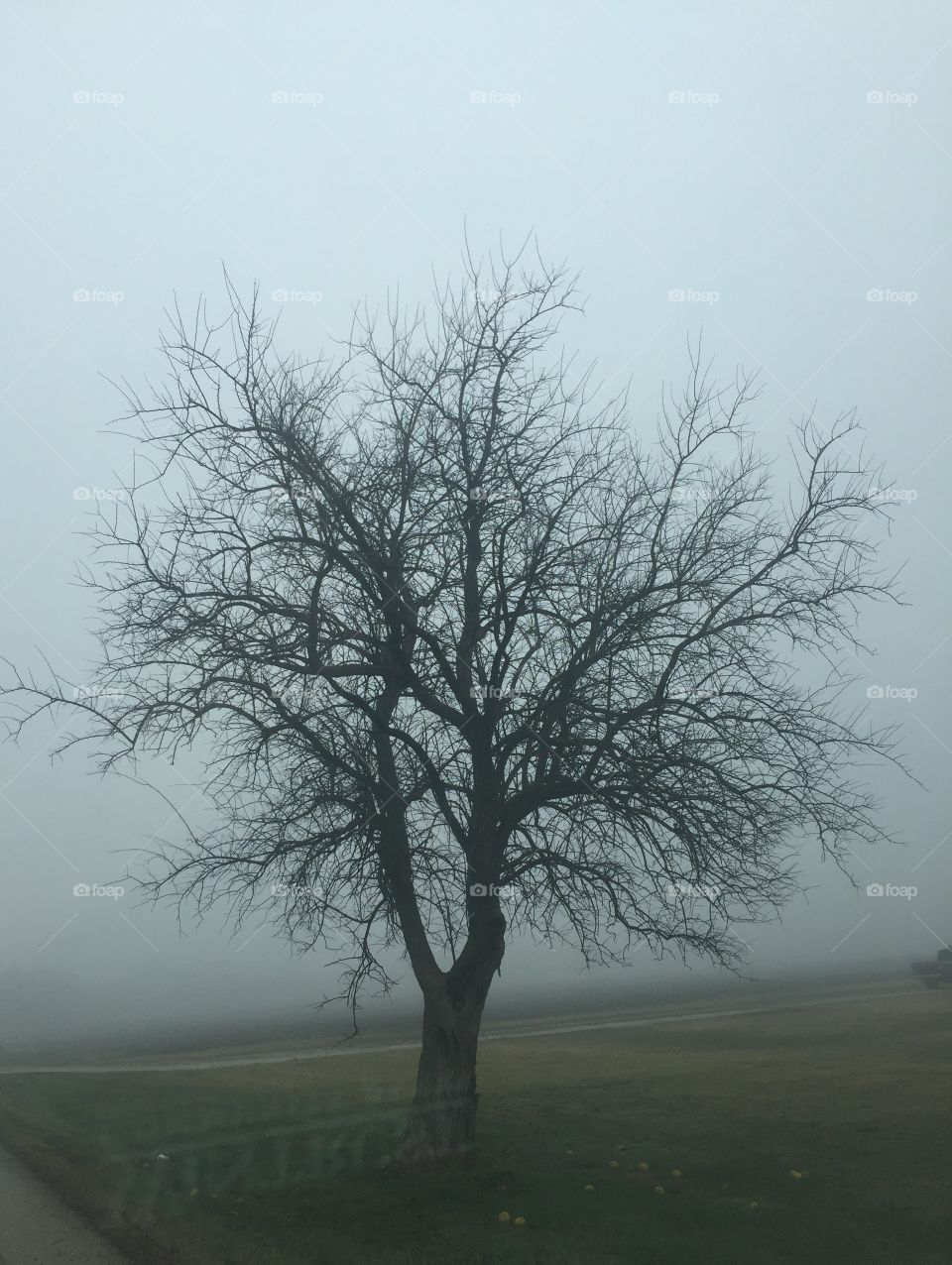 Winter tree in the fog