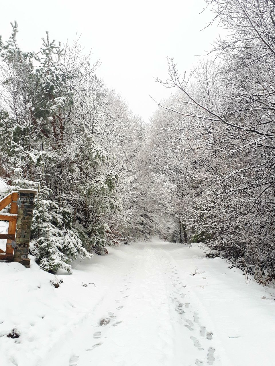 walks through the woods in winter and snow