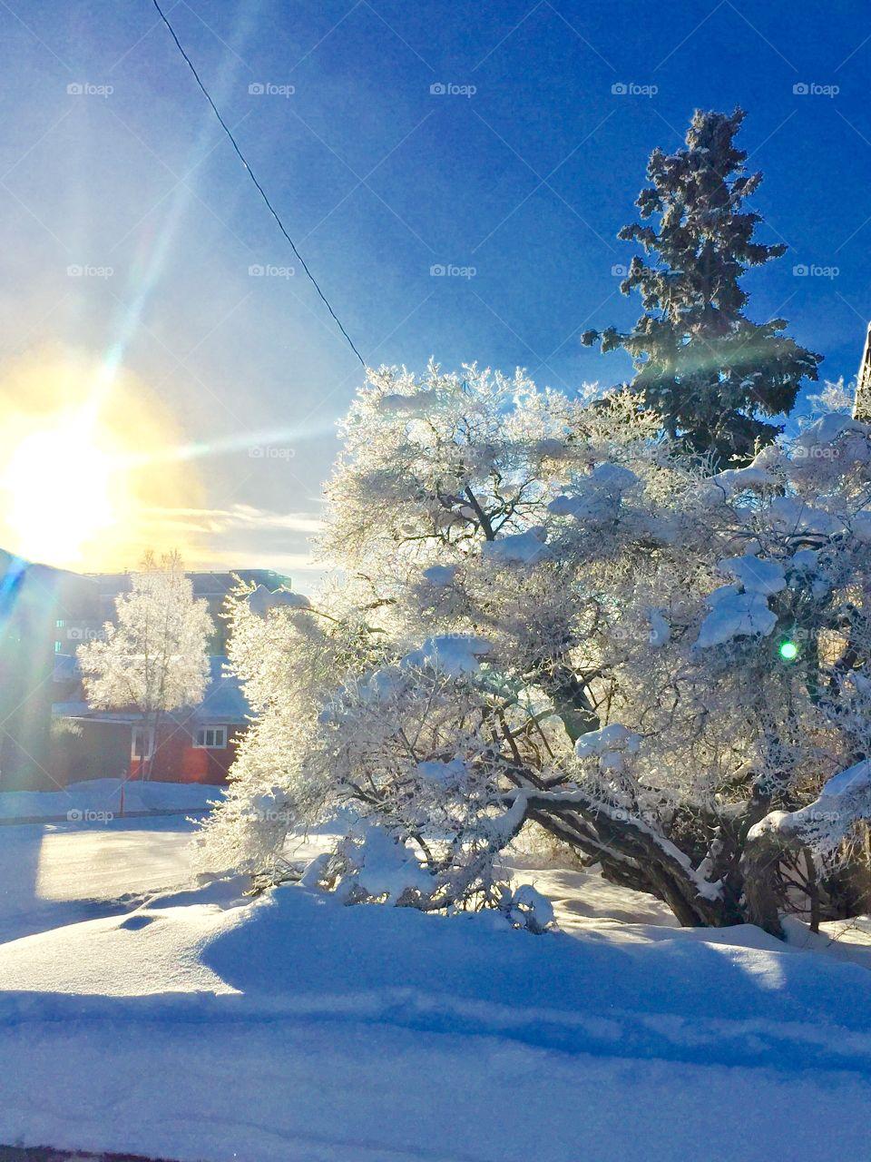 Cold!  Say it ain't so!!  Anchorage, AK