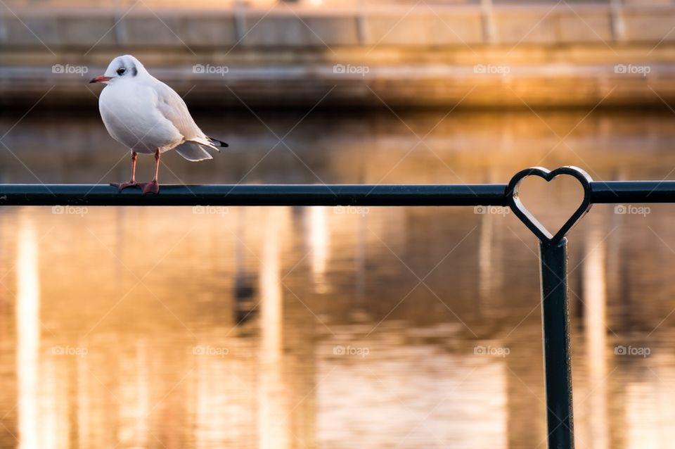 White seagull near lake