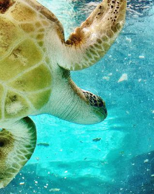 Underwater life sea turtle by sunnysmiles