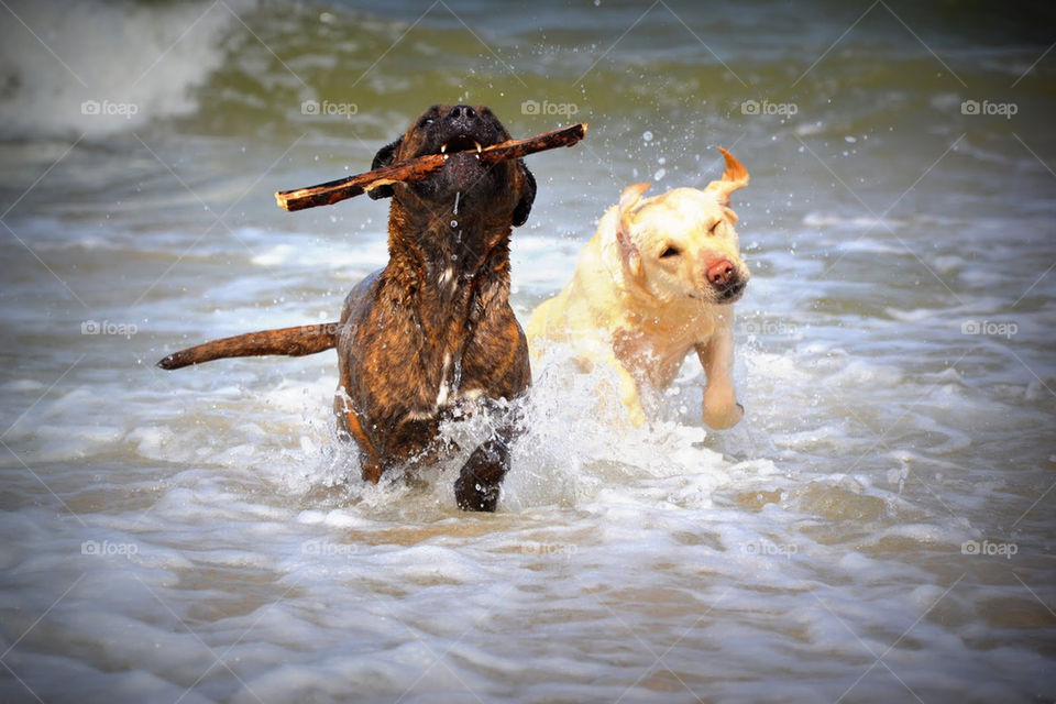 play dog dogs water by bubu