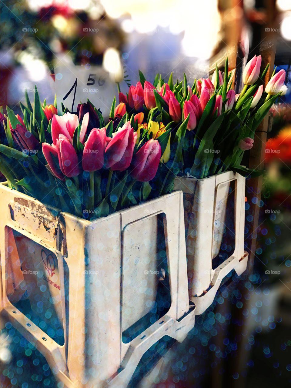 Tulip flowers in market for sale