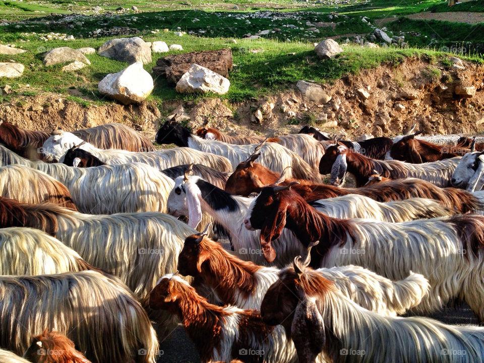 life village meat peace by kk_tt