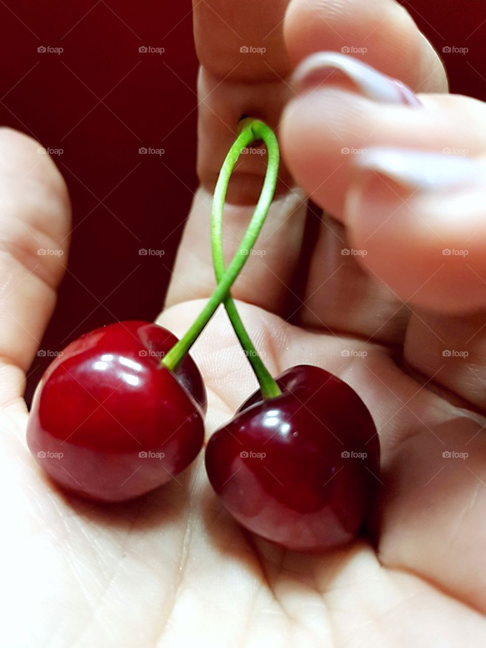 Delicious berries of red cherry in a woman's hand.