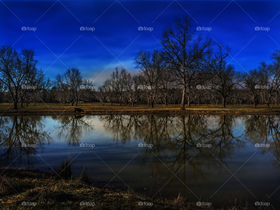 Pond Reflections At Mid Day