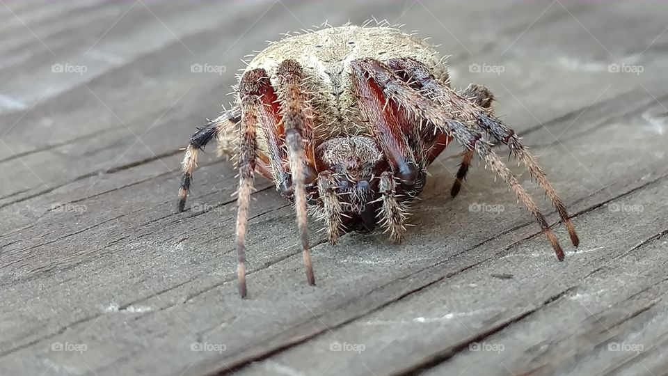 Spider, Nature, Arachnid, Animal, Insect