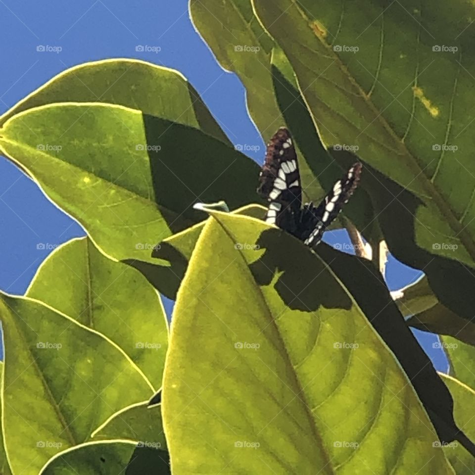 Natural Light Vs Artificial Light Black And White Butterfly Atop A Magnificent Magnolia Tree Summer Sunshine