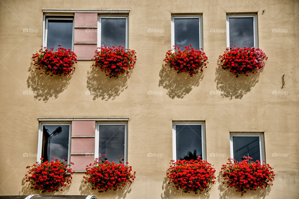 Flowers on windows of building