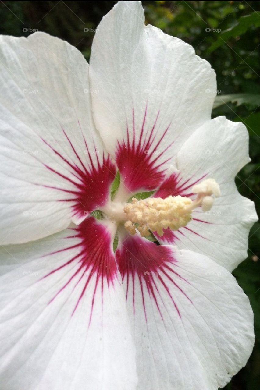 Glorious Flower