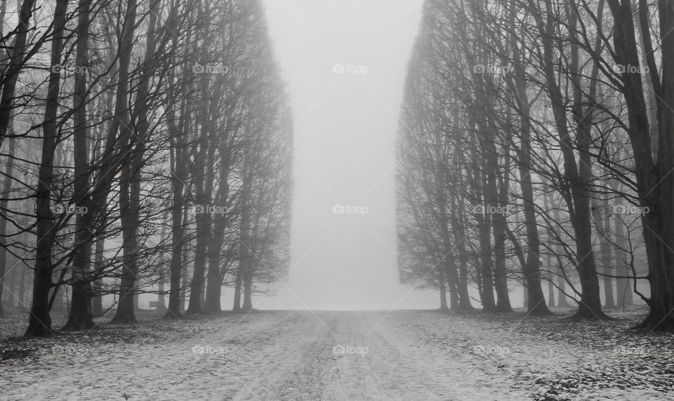 Foggy winter, Malmö, Sweden