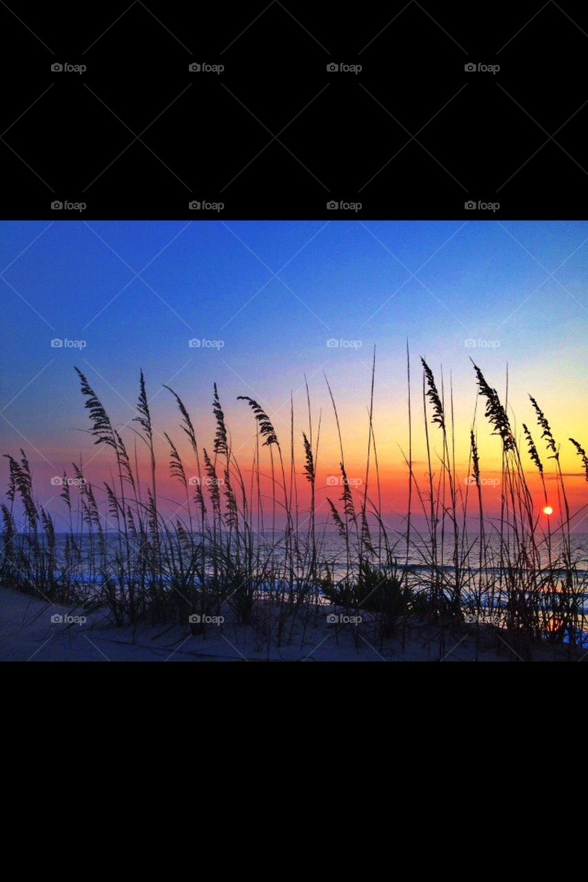 Virginia Sunrise  | 1st. popular pic, paradisefound, locals only, sea oats