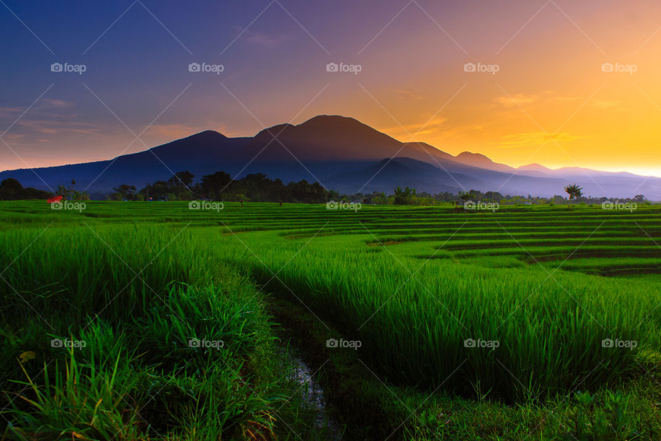 Sunrise moment at paddy fields in north bengkulu indonesia