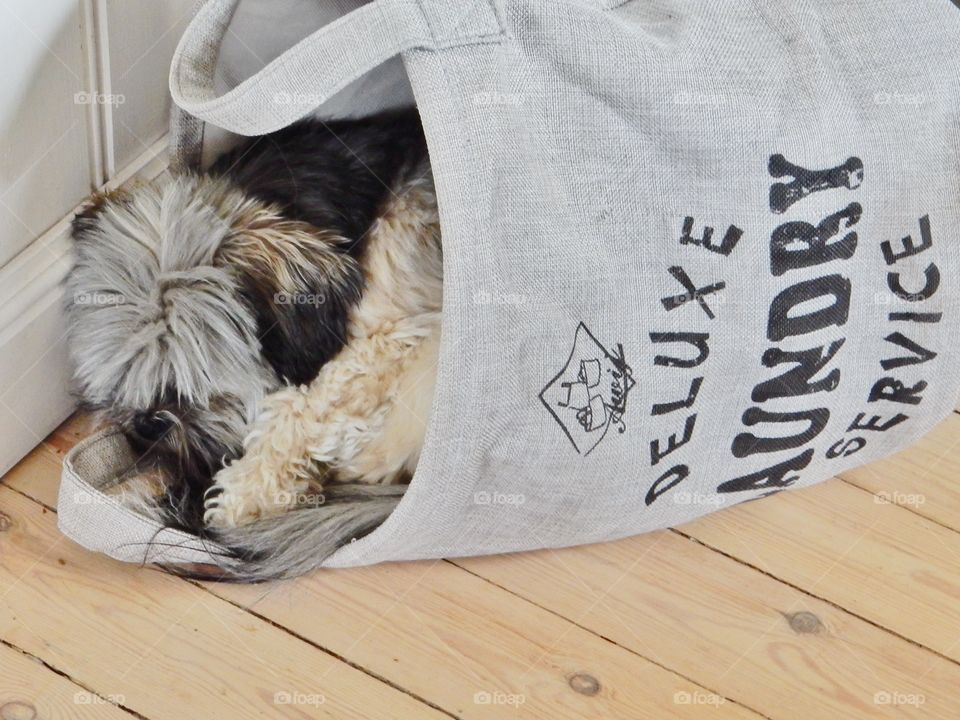 Laundry service . Laundry service deluxe  Little dog sleeping in the laundry basket