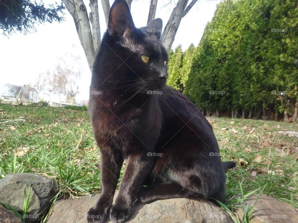 A black cat named Sebastian sitting in the sun 🌞