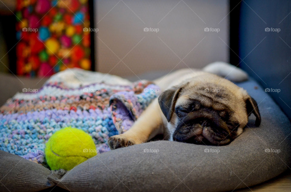 Close-up of a sleeping puppy