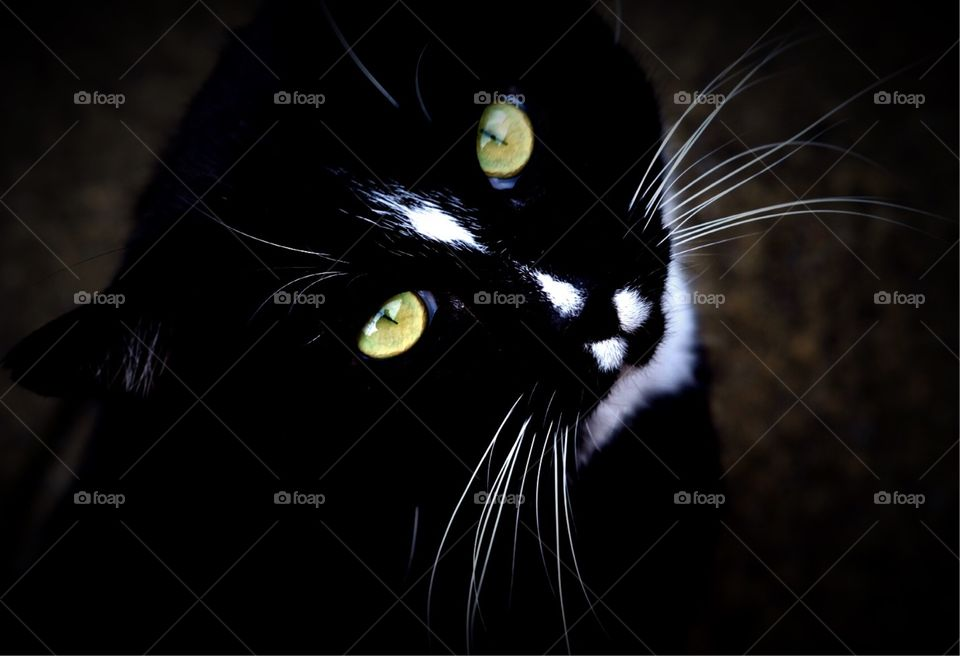 Cat looking up at the camera, Cat eyes, Green cat eyes peering upwards at you, Curious cat looking up, Fancy feline, Cat outside
