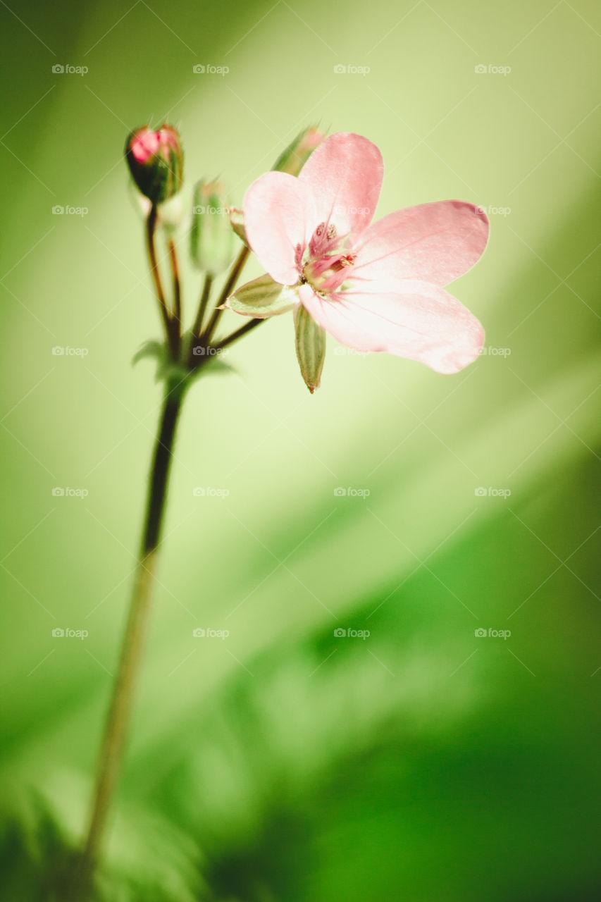 Pink flower outdoors