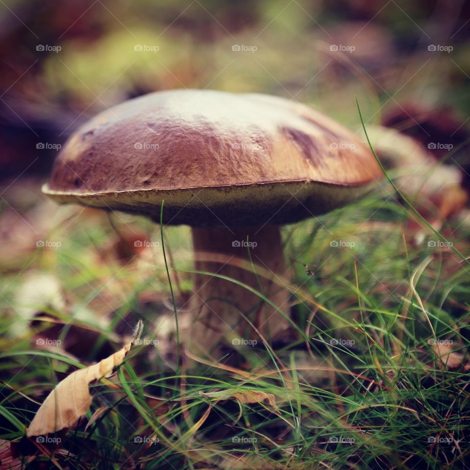 Nature. Mushroom in the woods