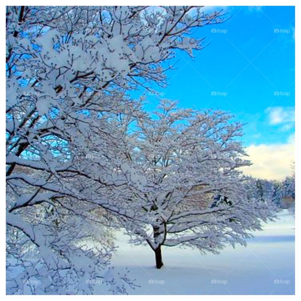 Blue Clear Winter