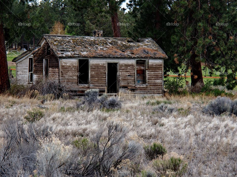 An old run down homestead amongst the ponderosa pine trees and sagebrush in rural Central Oregon on a spring day.