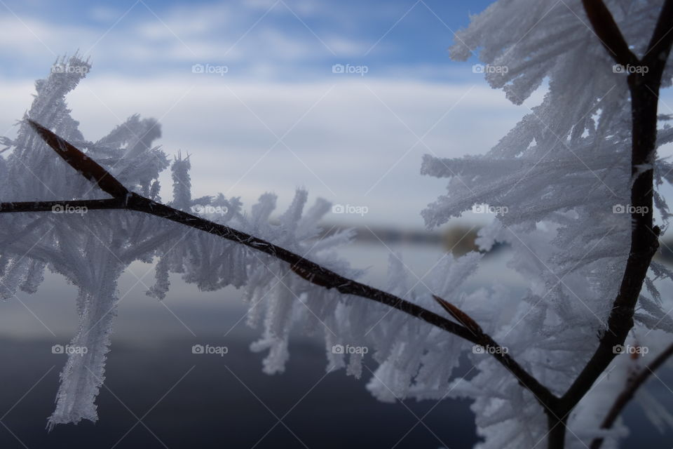 Close-up of snowy branch