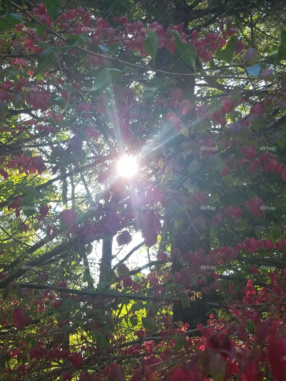 Pretty Sunrays
