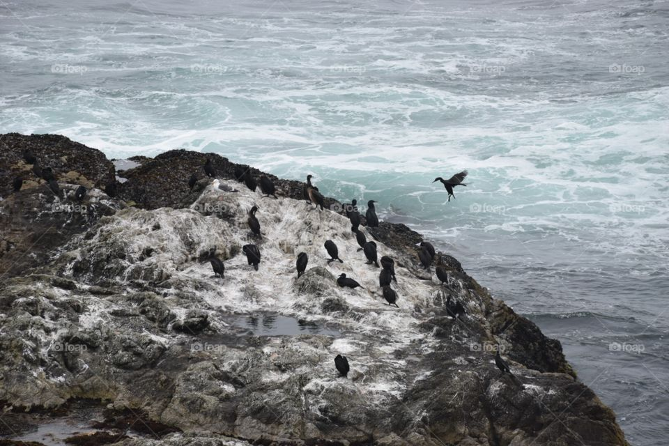Cormorants at Point Reyes