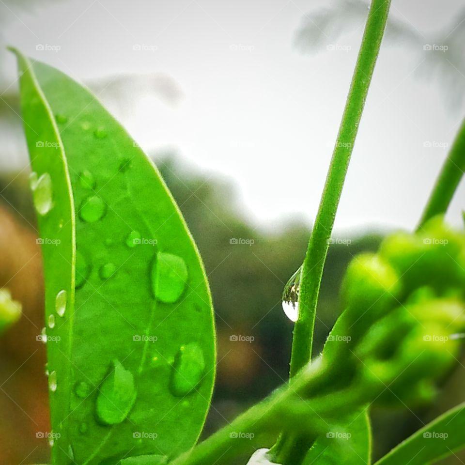 green leaf water droplet