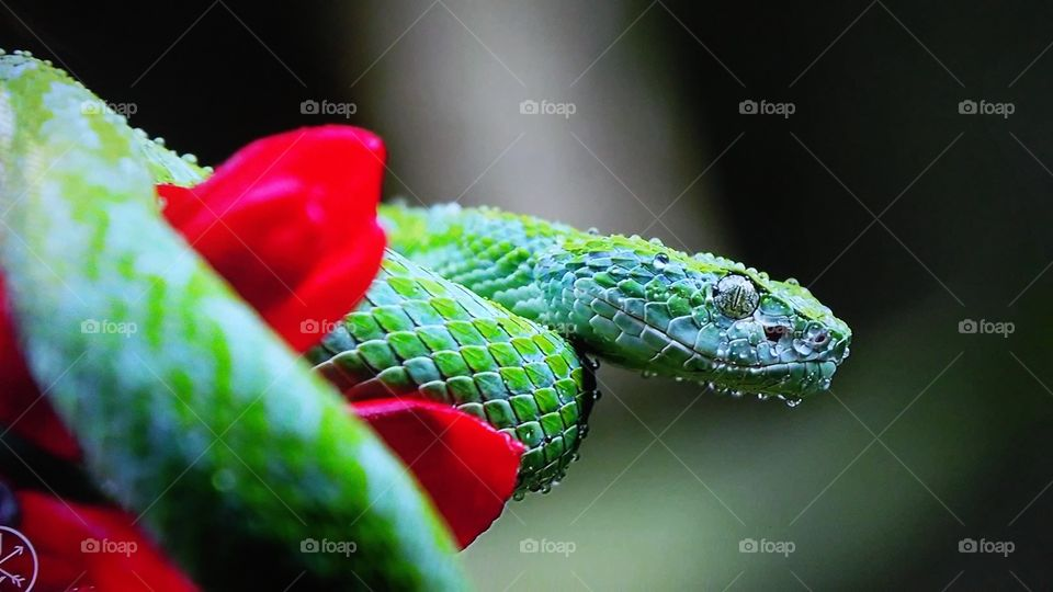 No Person, Nature, Leaf, Reptile, Outdoors