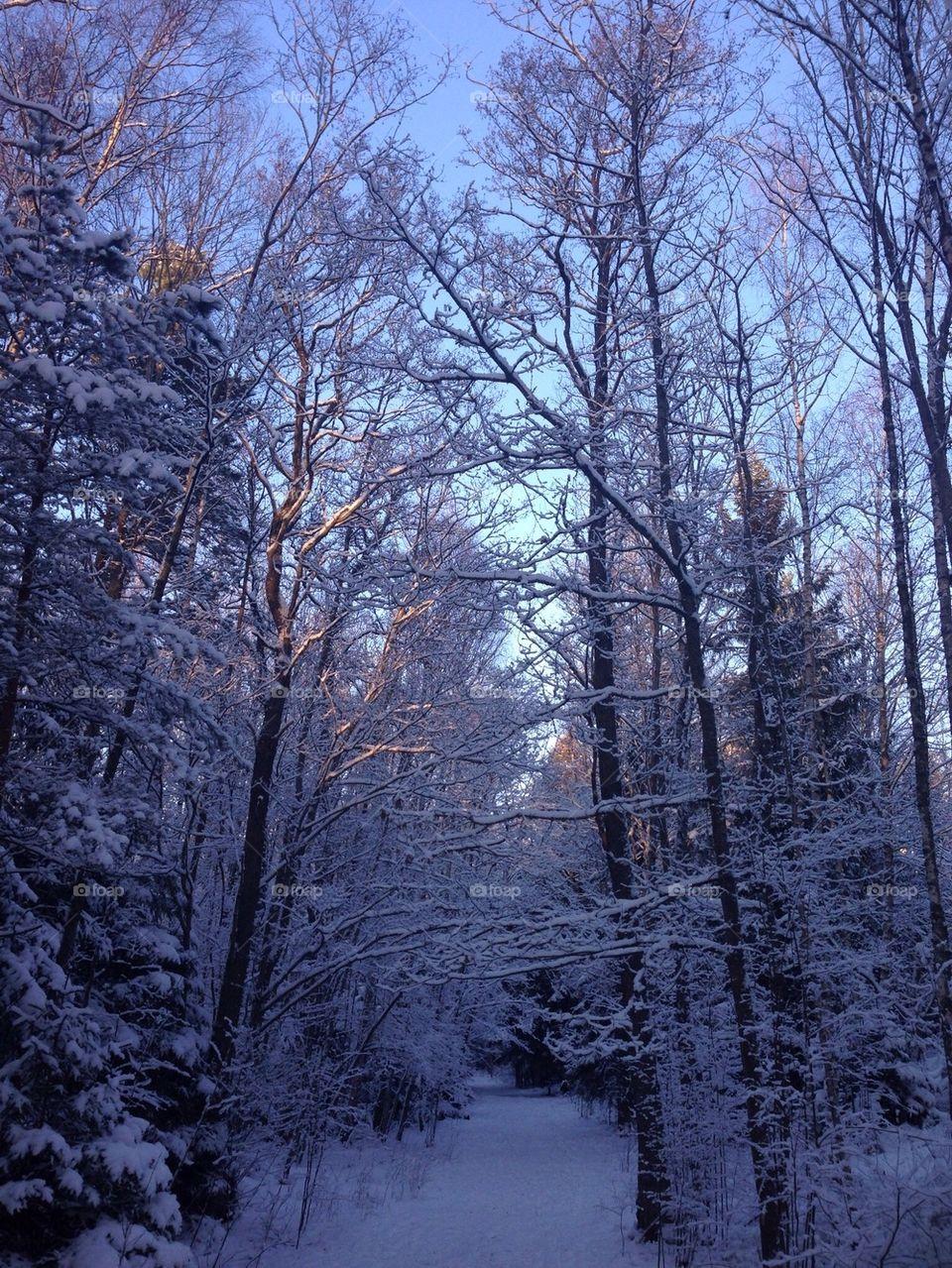 Winter in Forrest