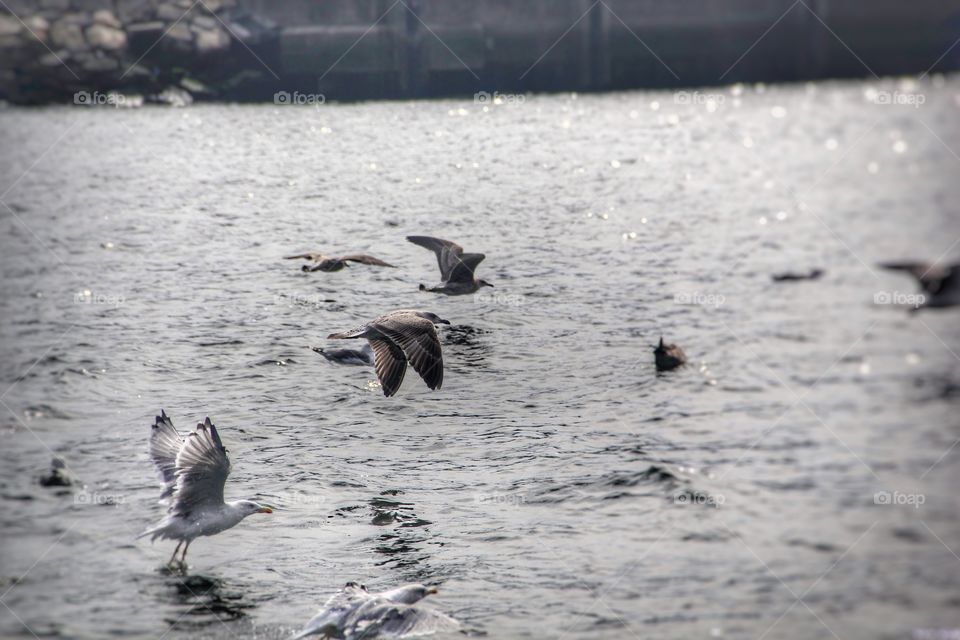 Seagulls over Duoro river in Porto