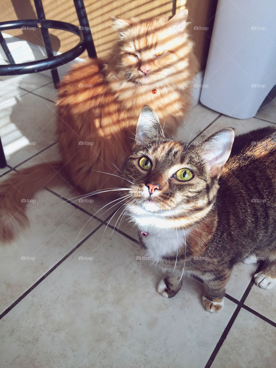 Cat, Domestic, Pet, Mammal, Cute