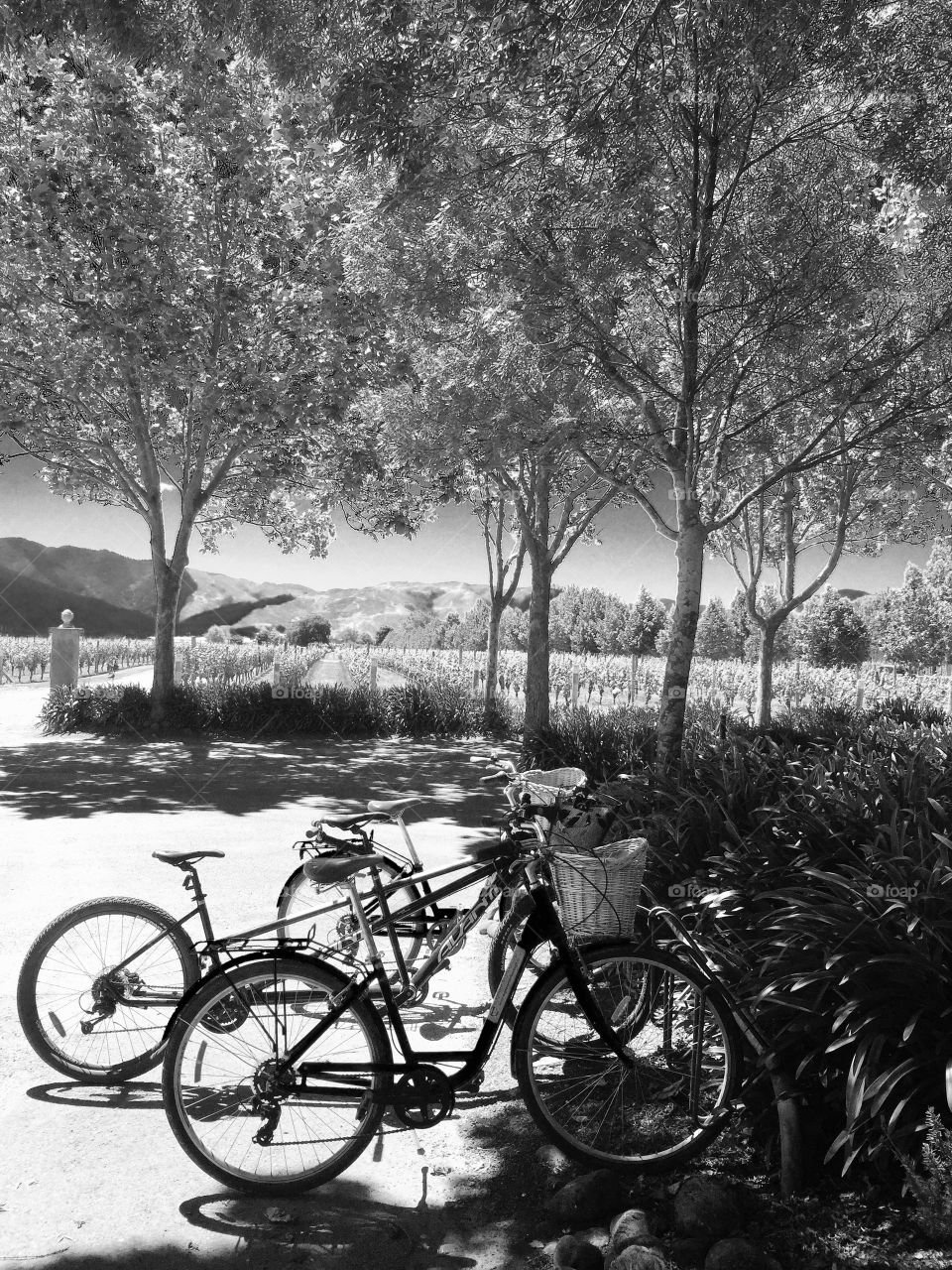 Bicycles in the shade