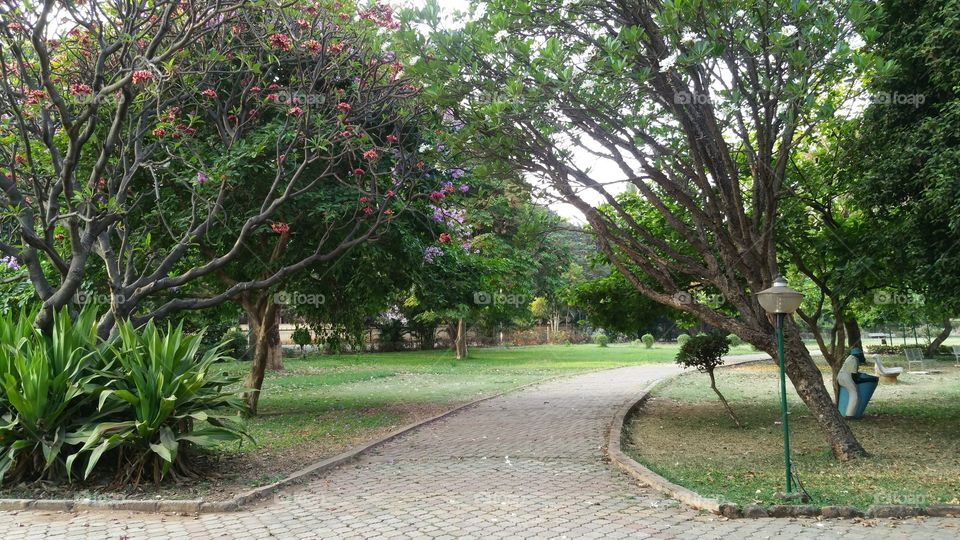 Garden Pathway. A beautiful park with lush green grass and wonderful trees surrounding it. Jogging in the morning