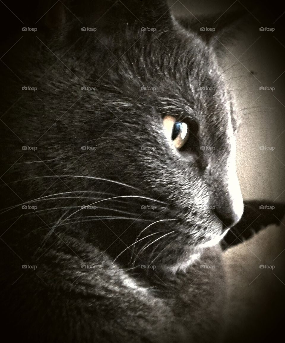 Kitty in thought