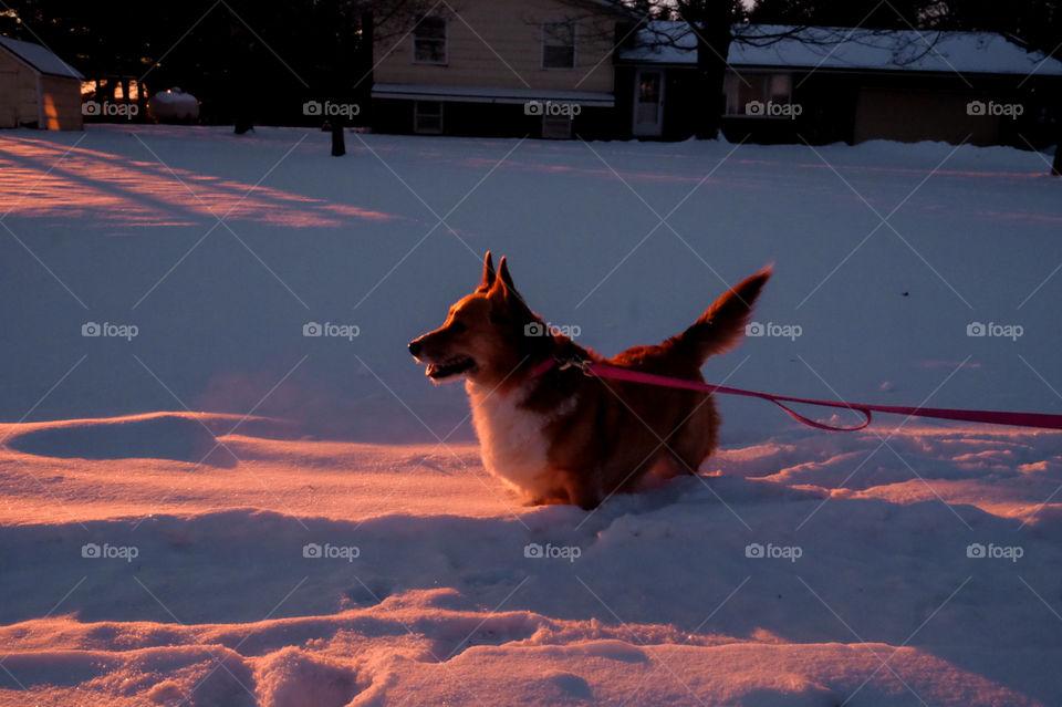 One, No Person, Dog, Snow, Mammal